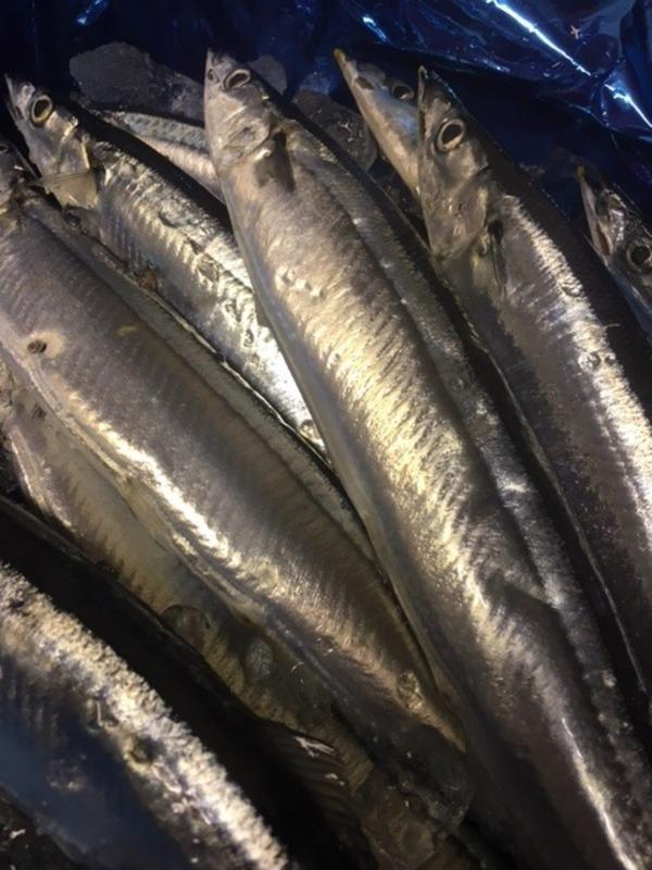 まだまだ秋刀魚が美味しい