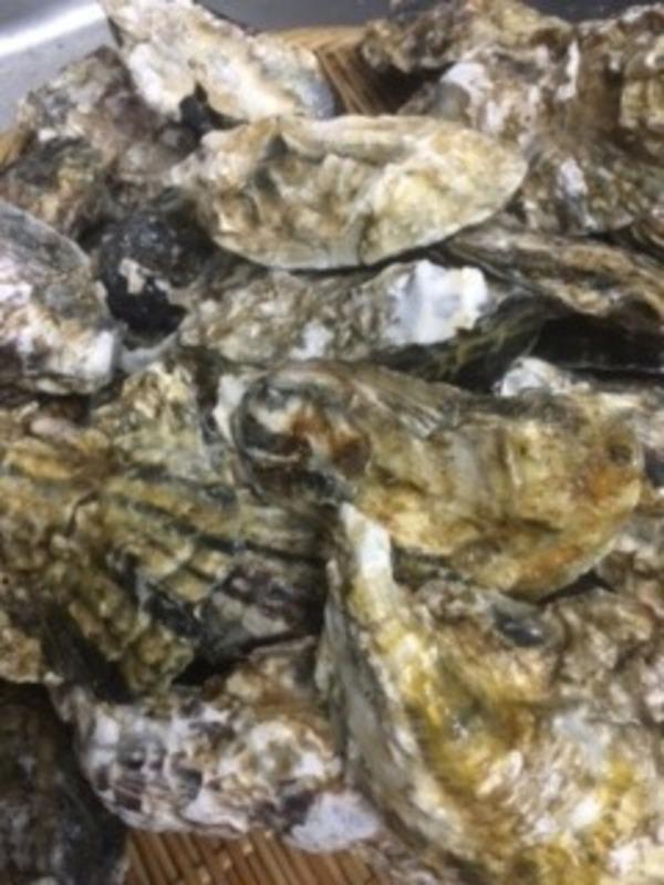本日の牡蠣は長崎県産