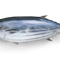 おいしく食べられる魚の旬はいつ?季節ごとの魚の旬を紹介